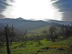 Tra gli ulivi / Between olive-trees / Medju maslinama
